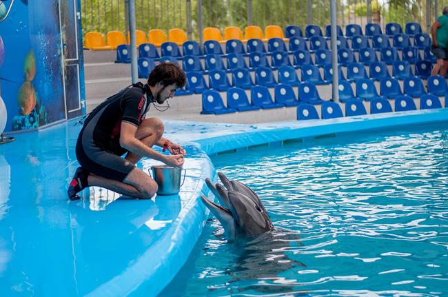 spectacles de dauphins au théâtre de Poséidon