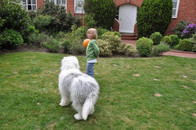 jouer avec le chien