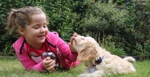 Chiens et enfants : 5 précautions et règles de sécurité à connaître