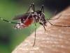 Comment protéger les enfants contre les moustiques ?