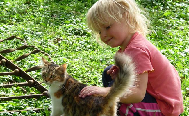 choisir un chat pour les enfants