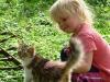 Existe-il une race de chat plus spécifiquement adaptée aux enfants ?