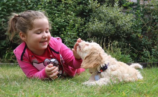 conseils pour bien accueillir un chien à la maison