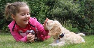 Accueillir un chien à la maison : conseils et précautions